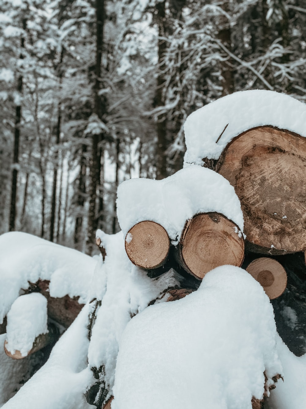 brown tree log covered with snow