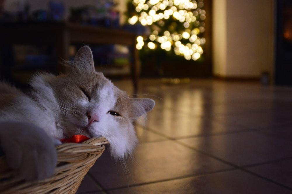 white cat on brown wooden floor