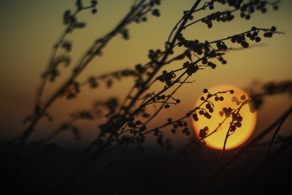 silhouette of tree branch during sunset
