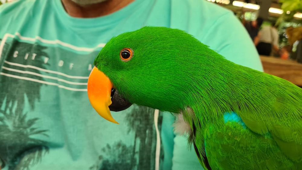 green and yellow bird on white textile
