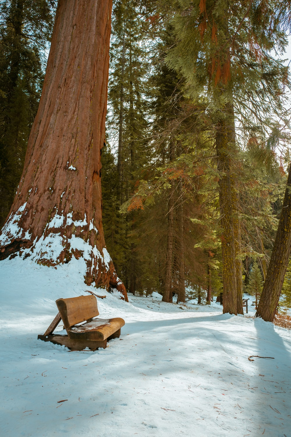 brown wooden bench on snow covered ground near brown trees during daytime