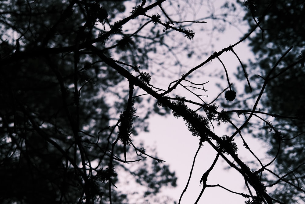silhouette of tree branch during night time