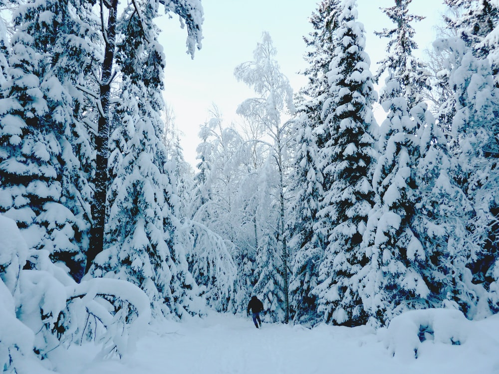 snow covered pine trees during daytime