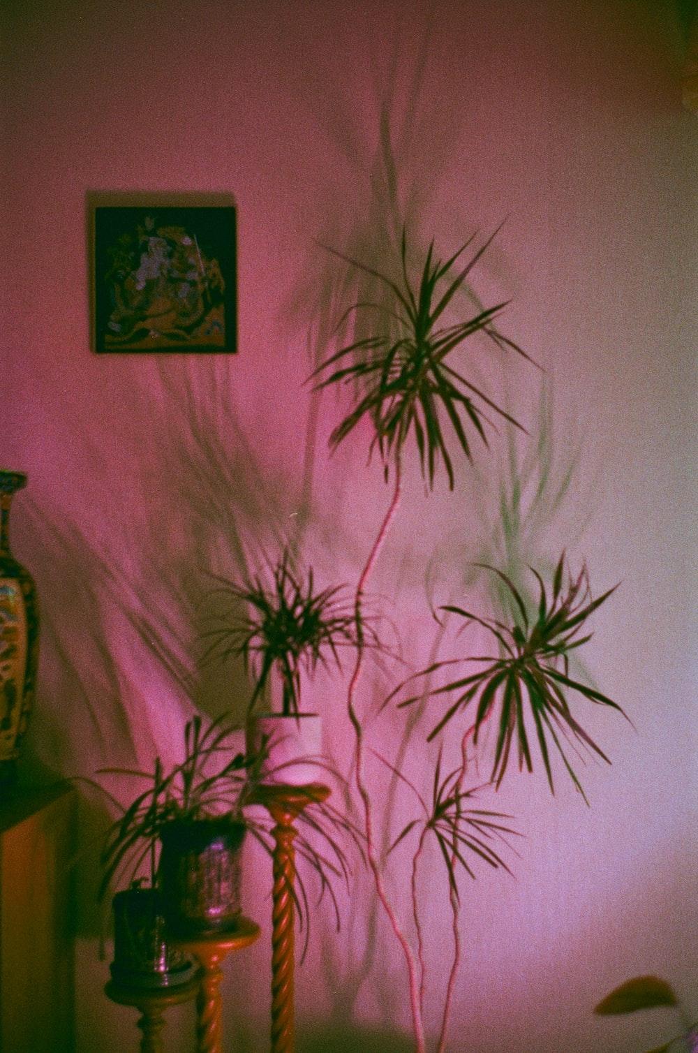 green palm plant near white wall