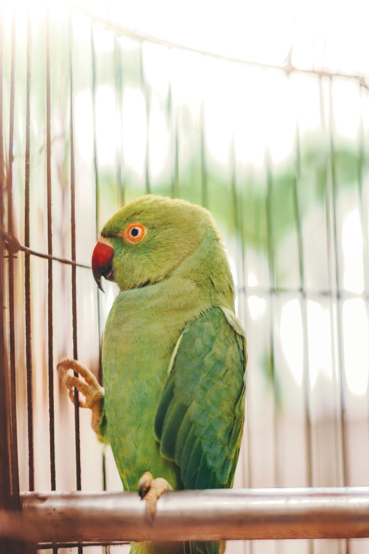green bird on white window blinds