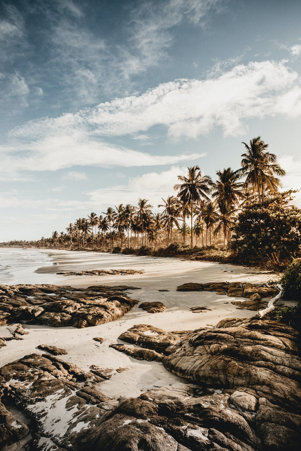 green palm trees on beach shore under white clouds and blue sky during daytime
