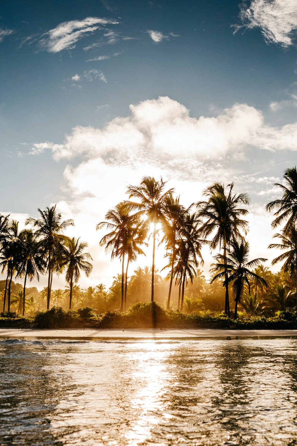 green coconut trees near body of water during daytime