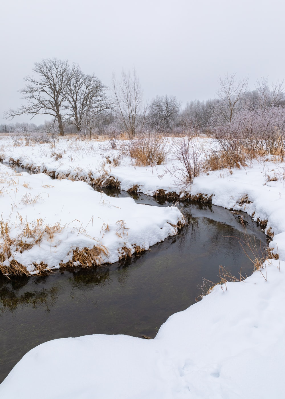 snow covered field and trees beside river during daytime