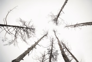 low angle photography of leafless trees