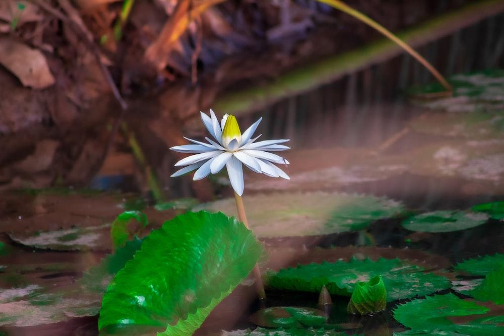white flower on green water