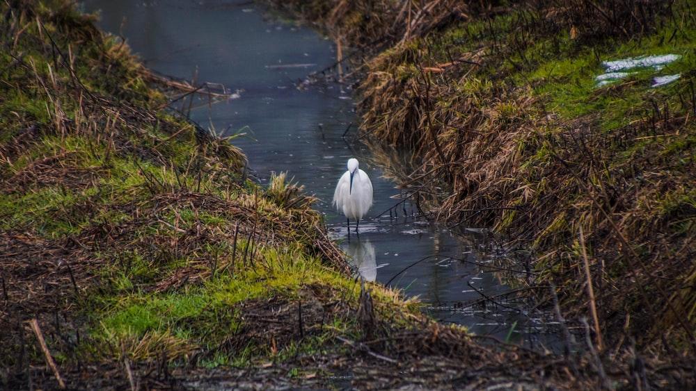 white bird on body of water during daytime