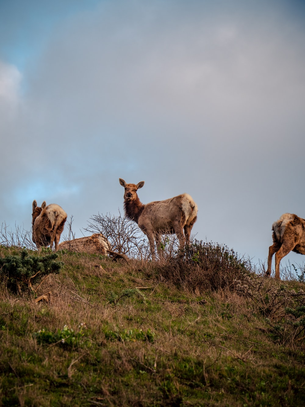 herd of goats on green grass field under white clouds and blue sky during daytime