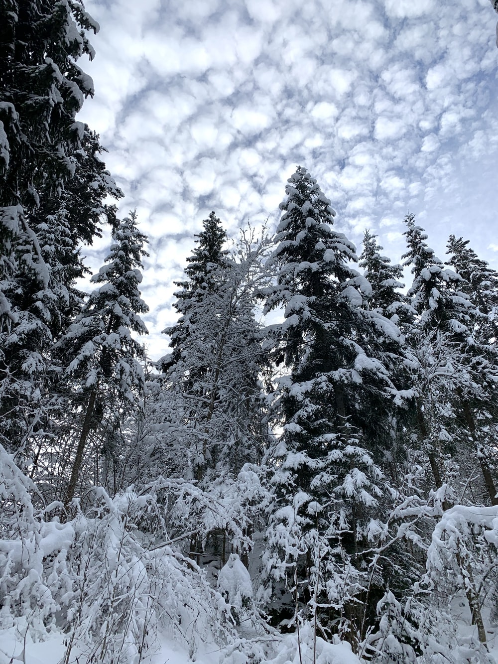 green pine trees covered with snow under blue sky and white clouds during daytime