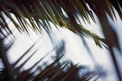 green palm tree under white sky during daytime palm sunday zoom background