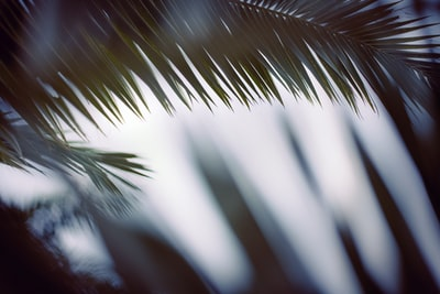 green palm tree during daytime palm sunday zoom background