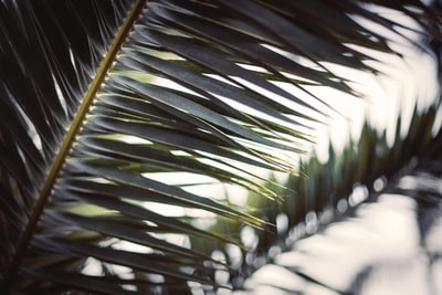 green palm plant during daytime palm sunday zoom background