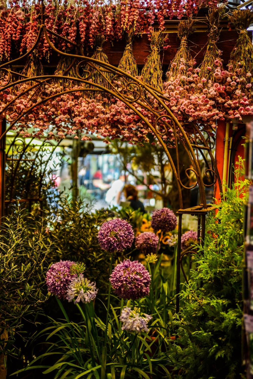 purple flowers in front of brown metal gate