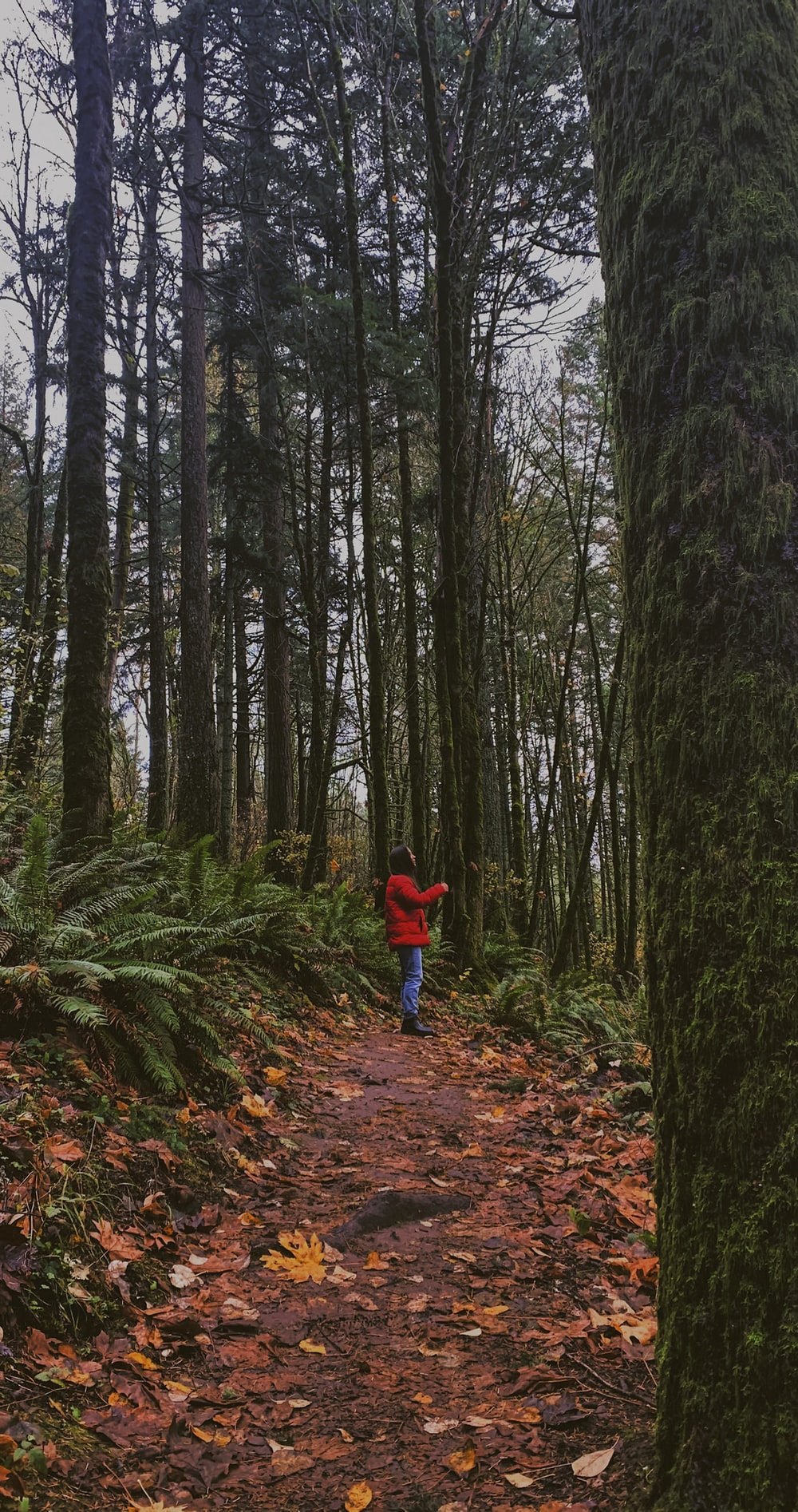 child in red jacket and blue pants walking on forest during daytime
