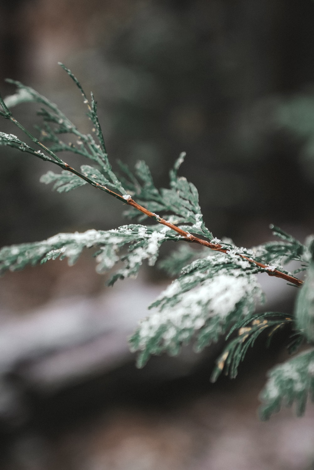 green leaf with snow in macro photography