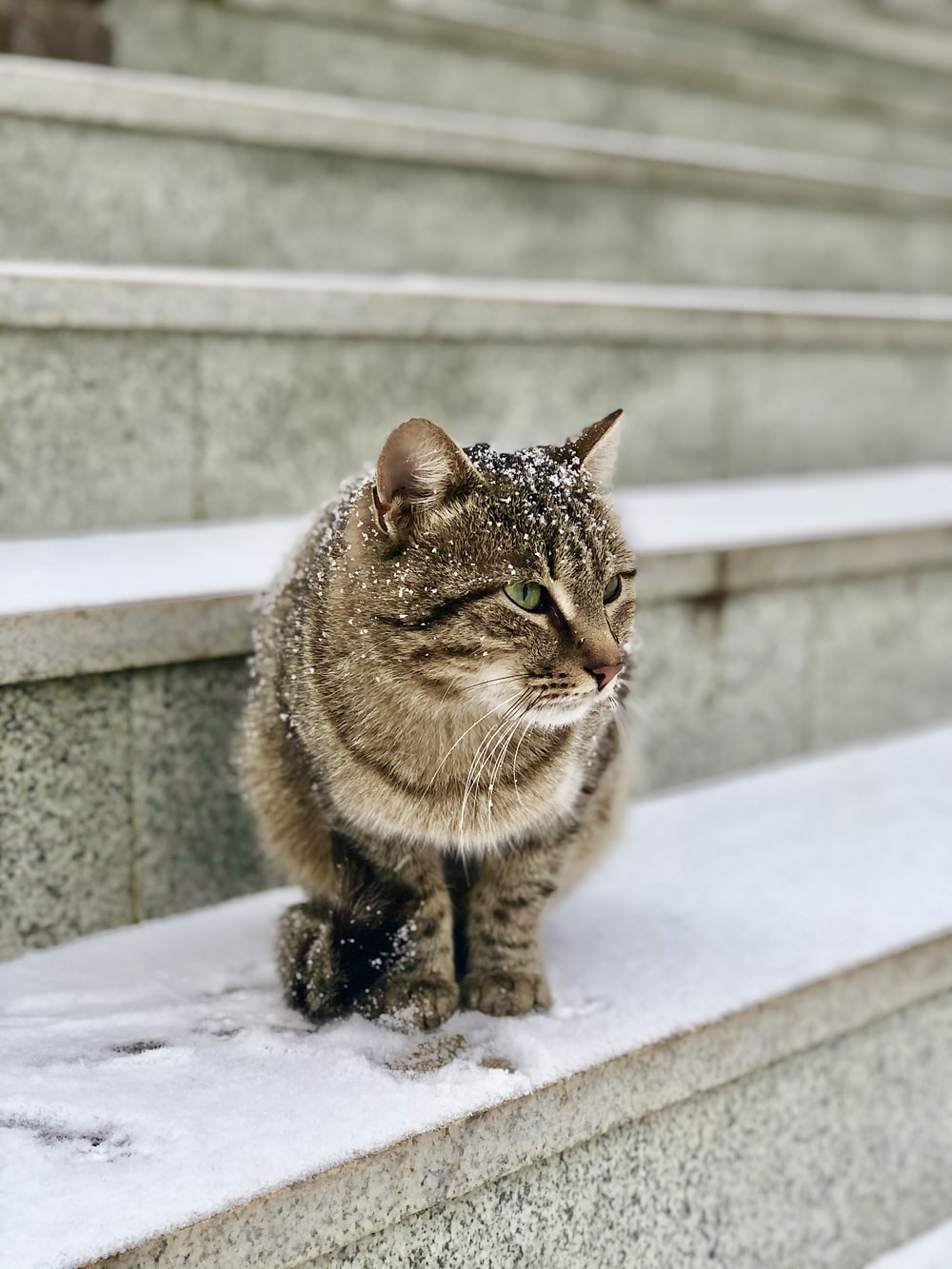 brown tabby cat on white concrete surface