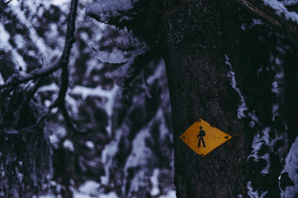 yellow arrow sign on tree trunk