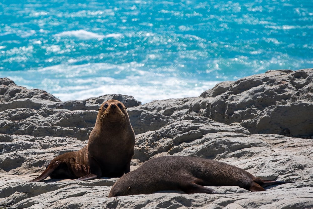 sea lion on gray rock during daytime