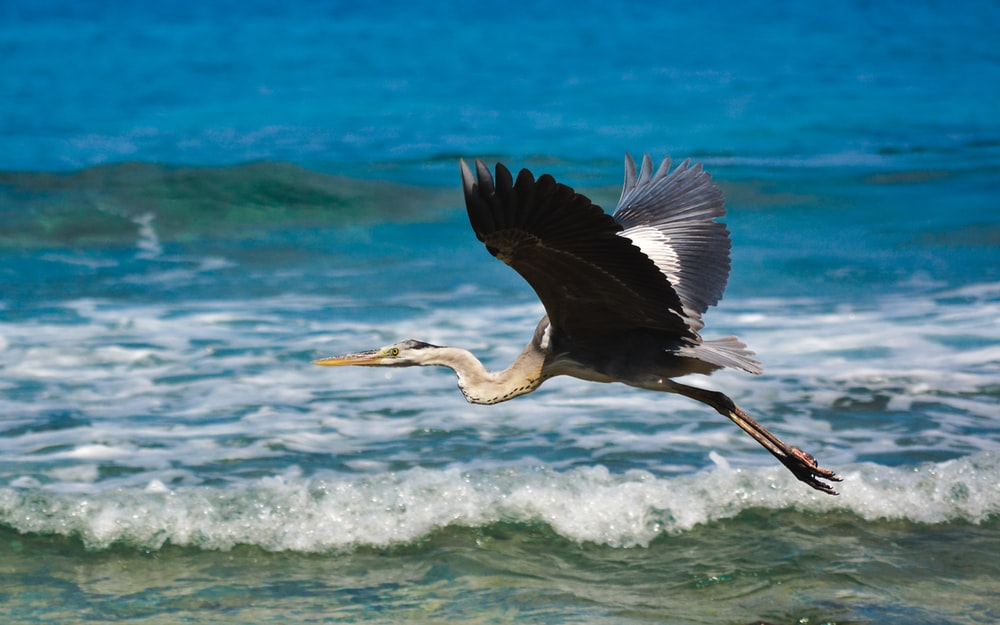 black and white bird flying over the sea during daytime