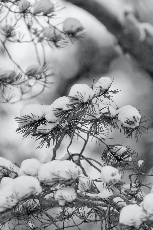 white snow on black tree branch