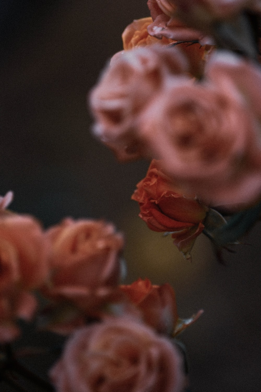 orange flower in macro shot