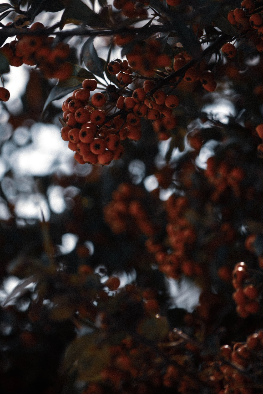 brown round fruits in tilt shift lens