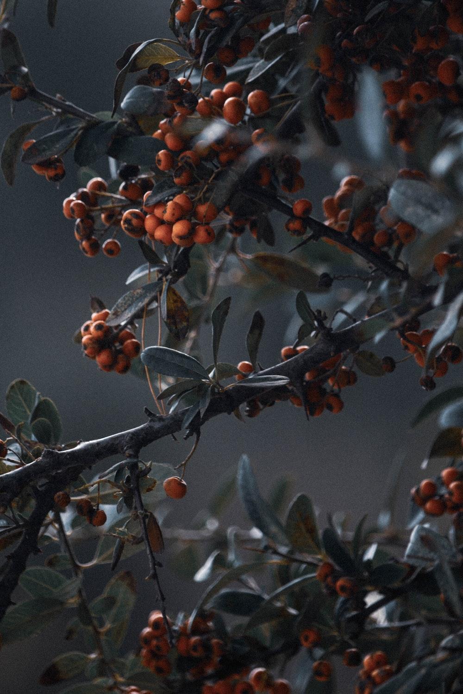 orange and gray fruits on tree