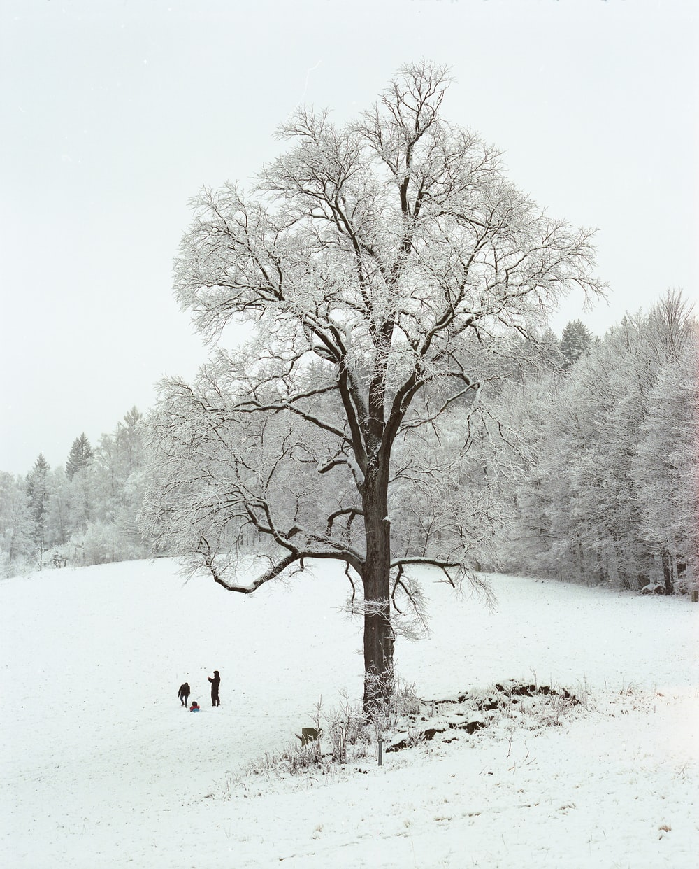 person walking on snow covered ground near bare trees during daytime