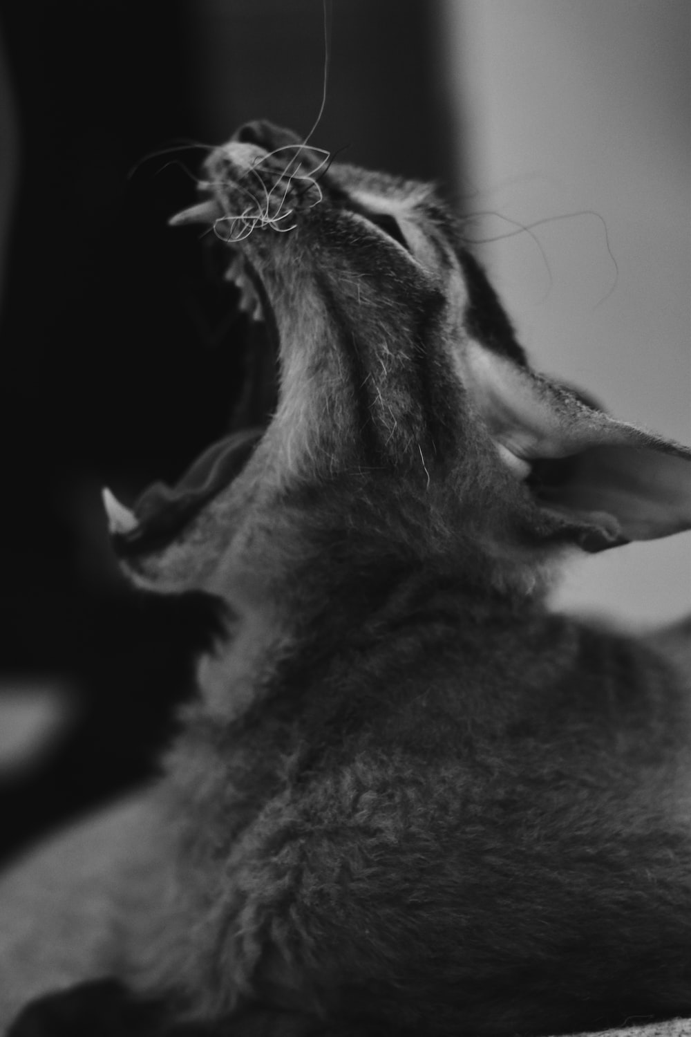grayscale photo of a cat with a tree branch