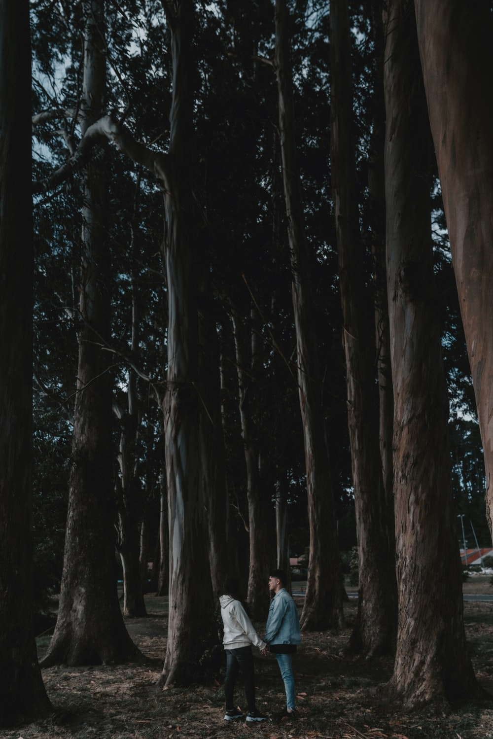 people walking on pathway between trees during daytime