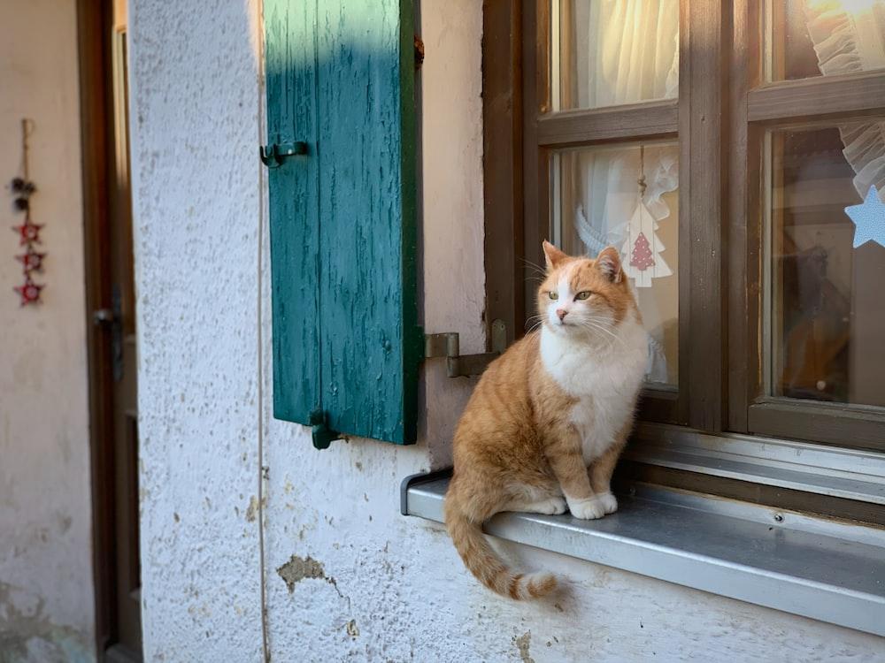orange and white cat sitting on window