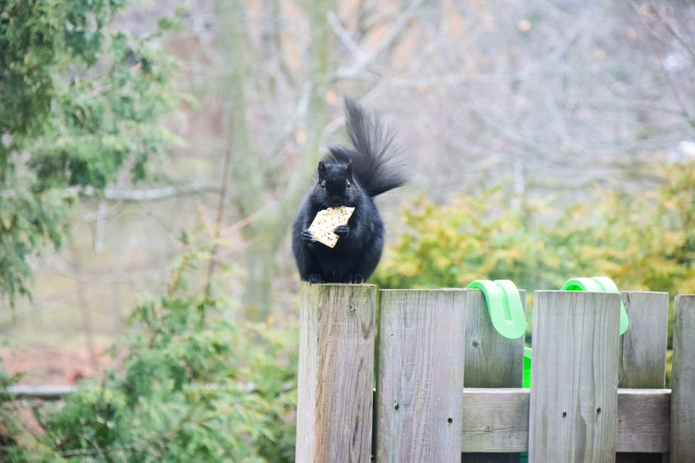 black and white bird on brown wooden fence during daytime