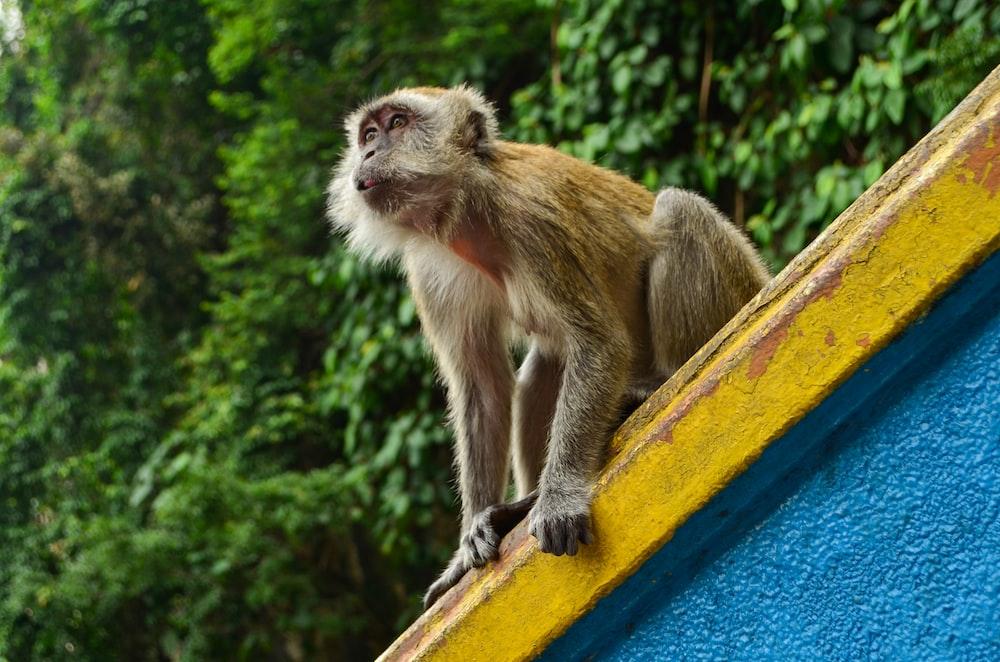 brown monkey sitting on yellow metal bar during daytime