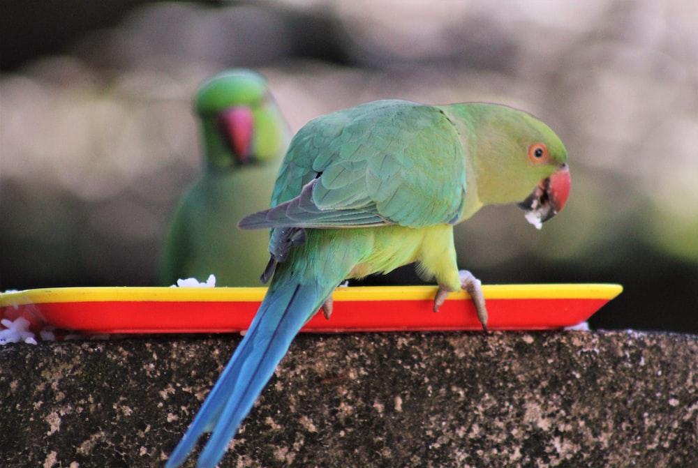 green and yellow bird on orange bar
