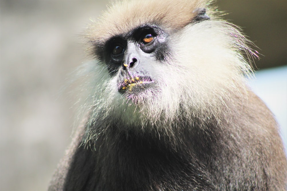 black and white monkey during daytime