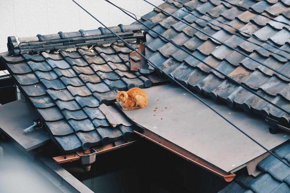 brown bread on black roof