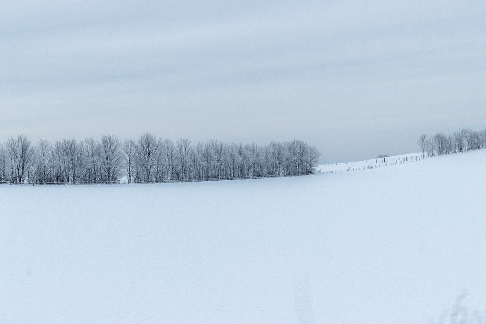 snow covered field during daytime