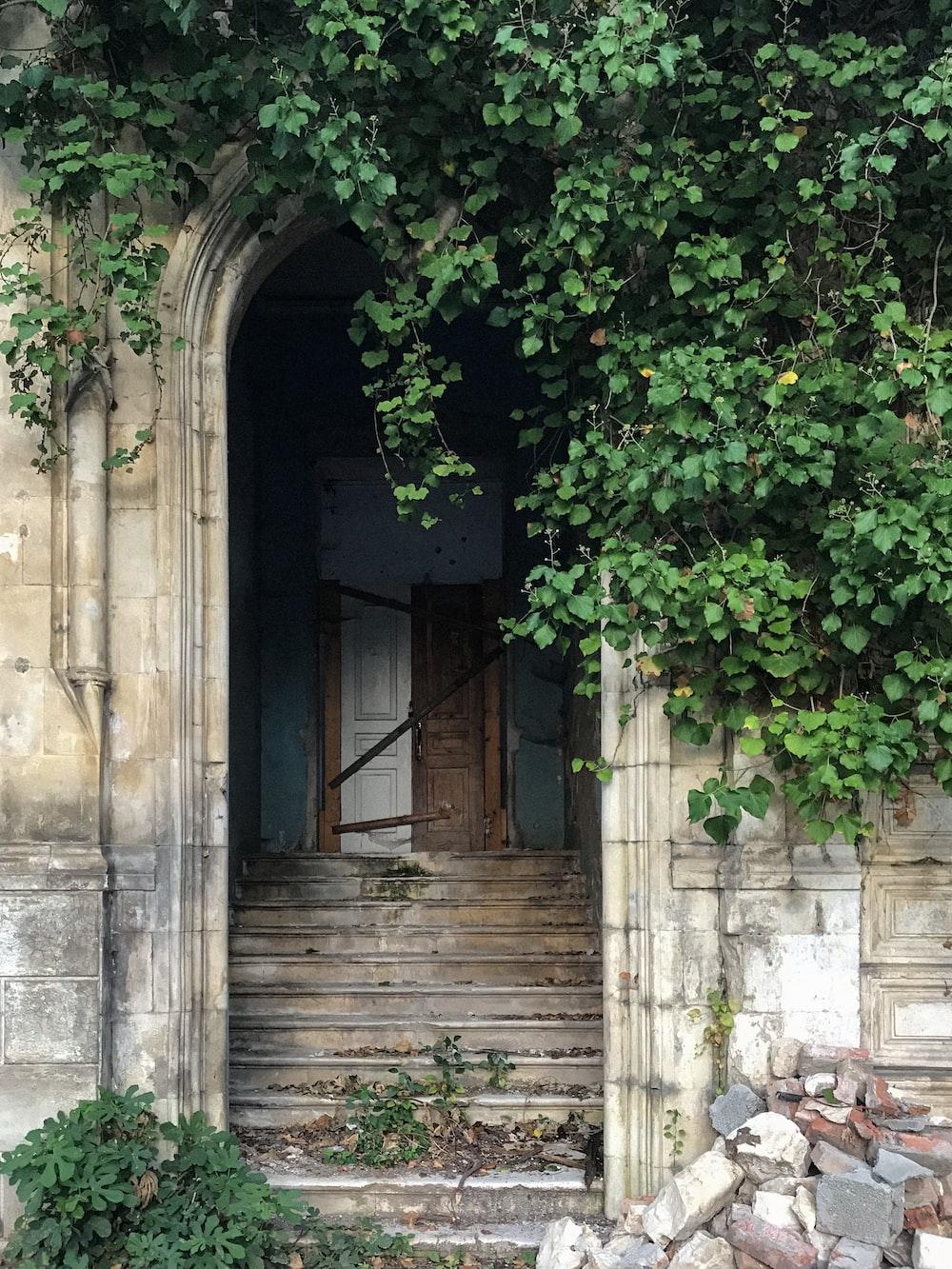 green leaves on brown wooden door