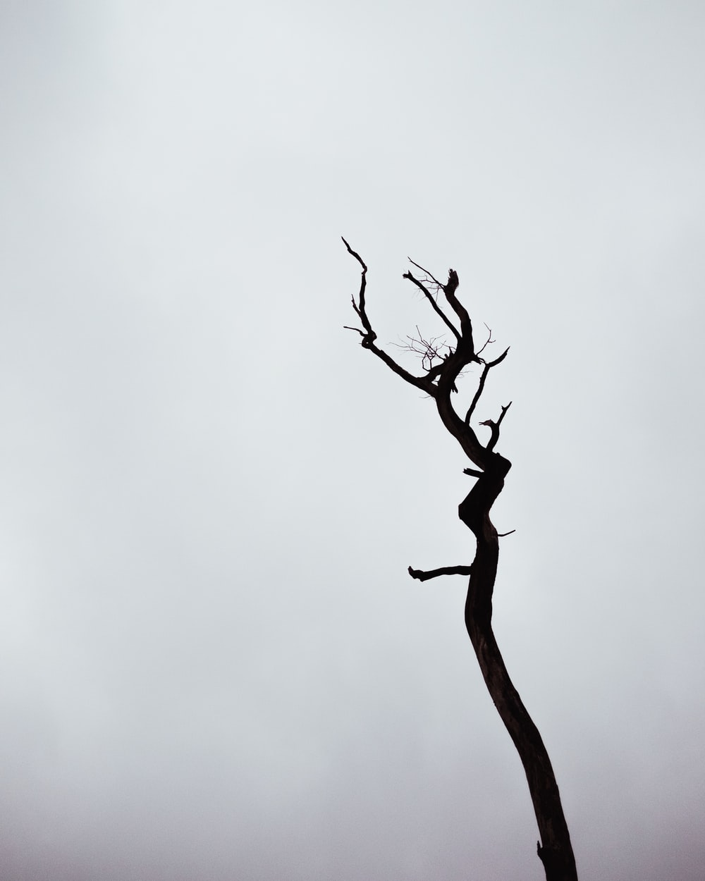 brown tree branch with white clouds