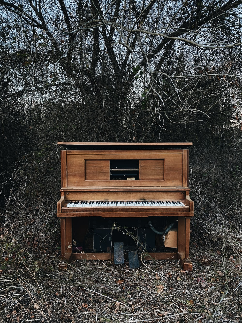 brown upright piano near black bare trees