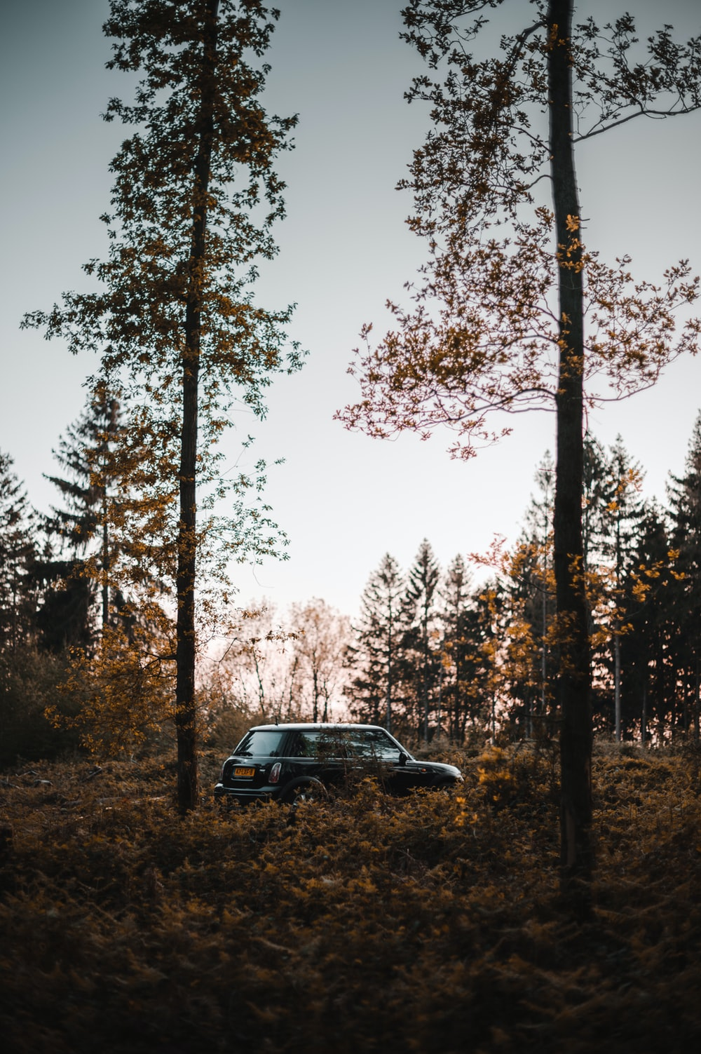black suv parked near trees during daytime