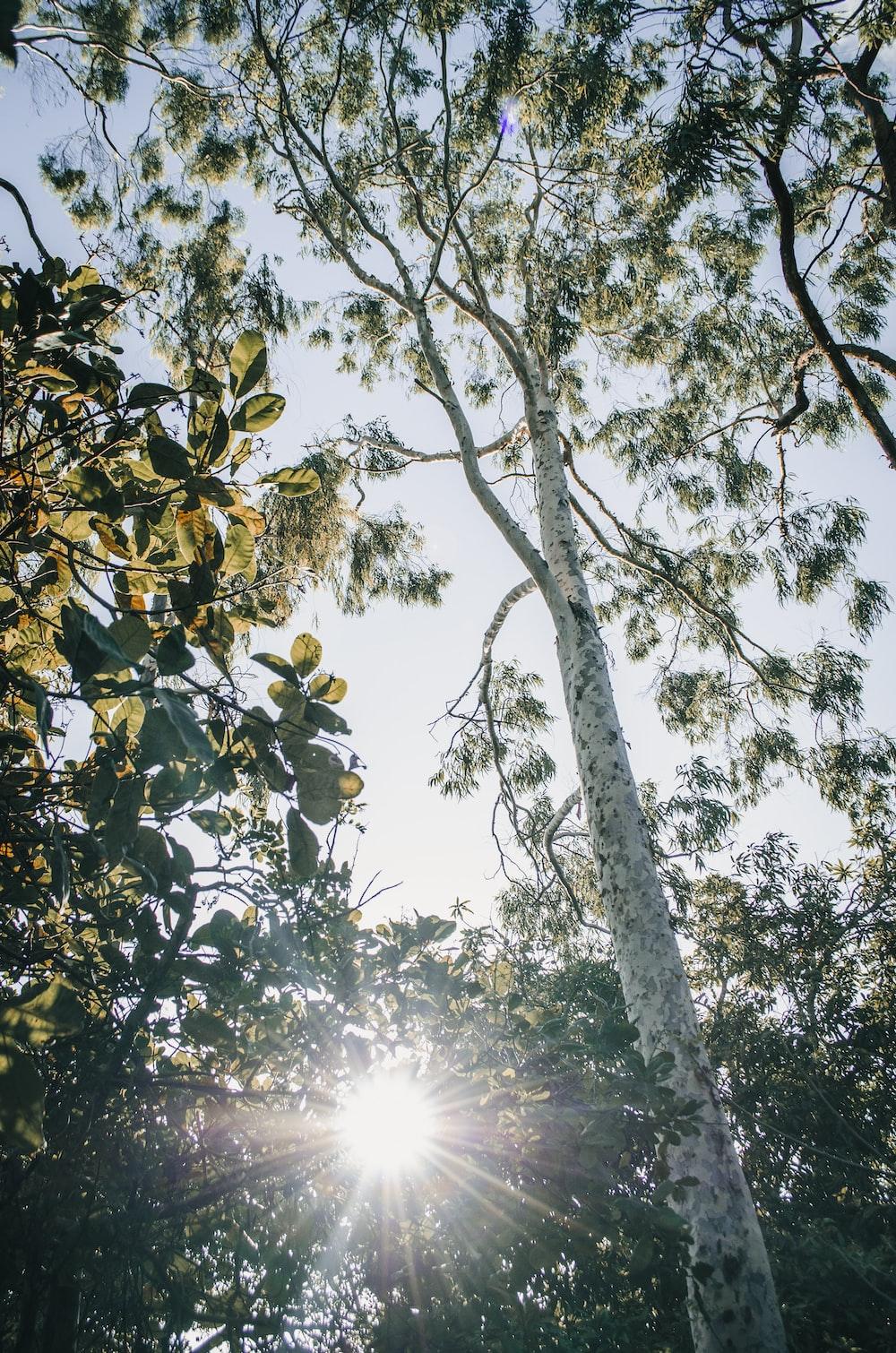 green tree with sun rays