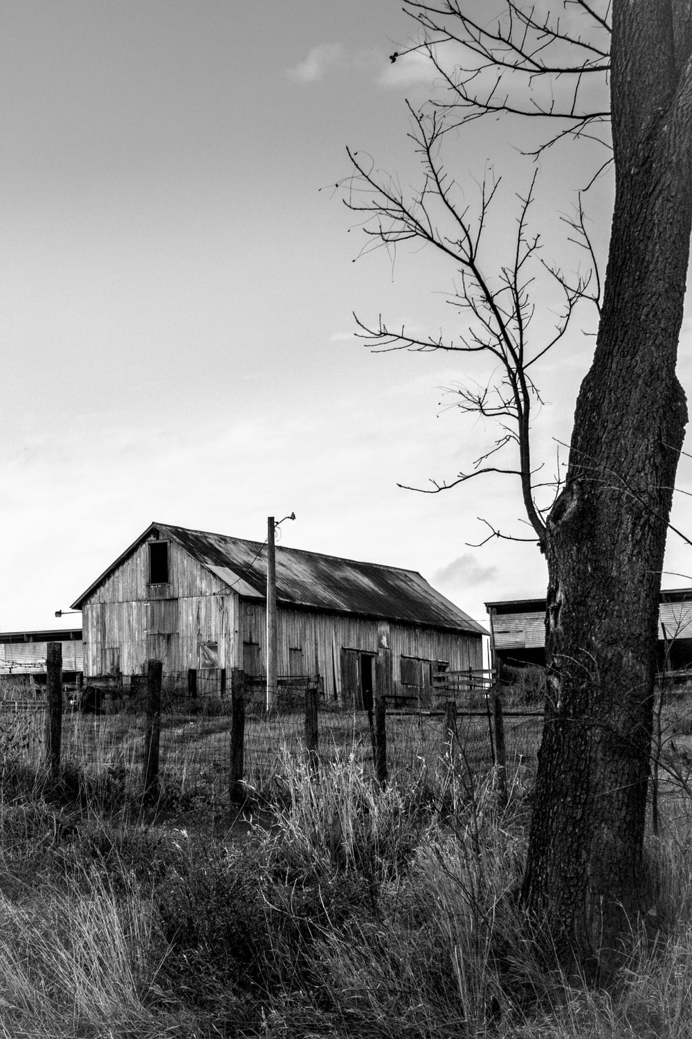 grayscale photo of bare trees near wooden house