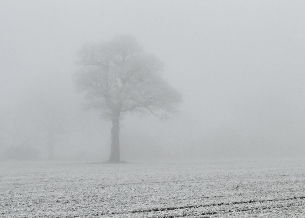 green tree covered with fog