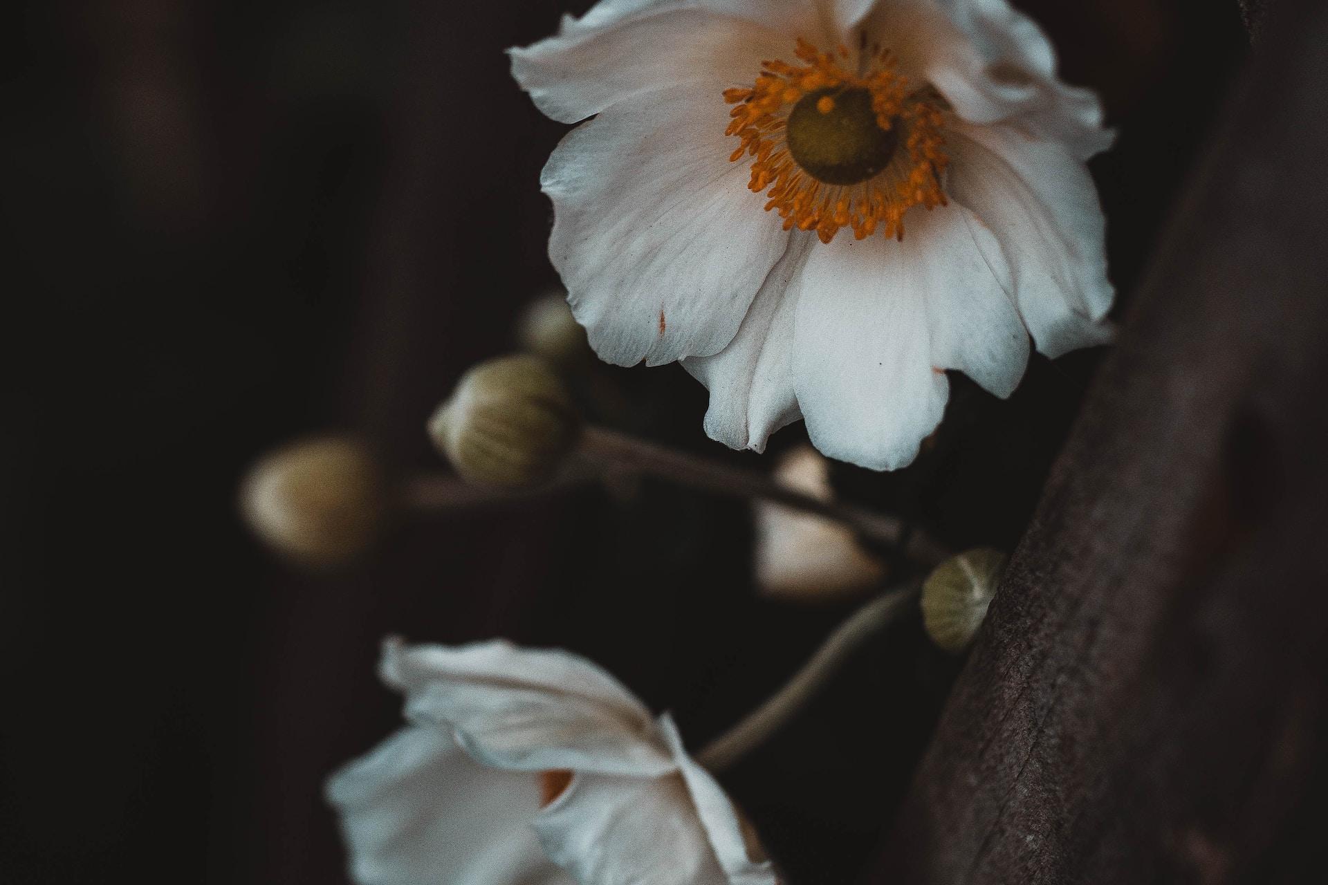 white flower on brown tree branch
