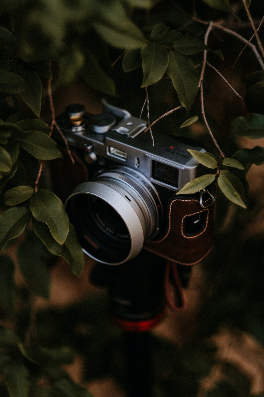 black and silver nikon camera on green leaves